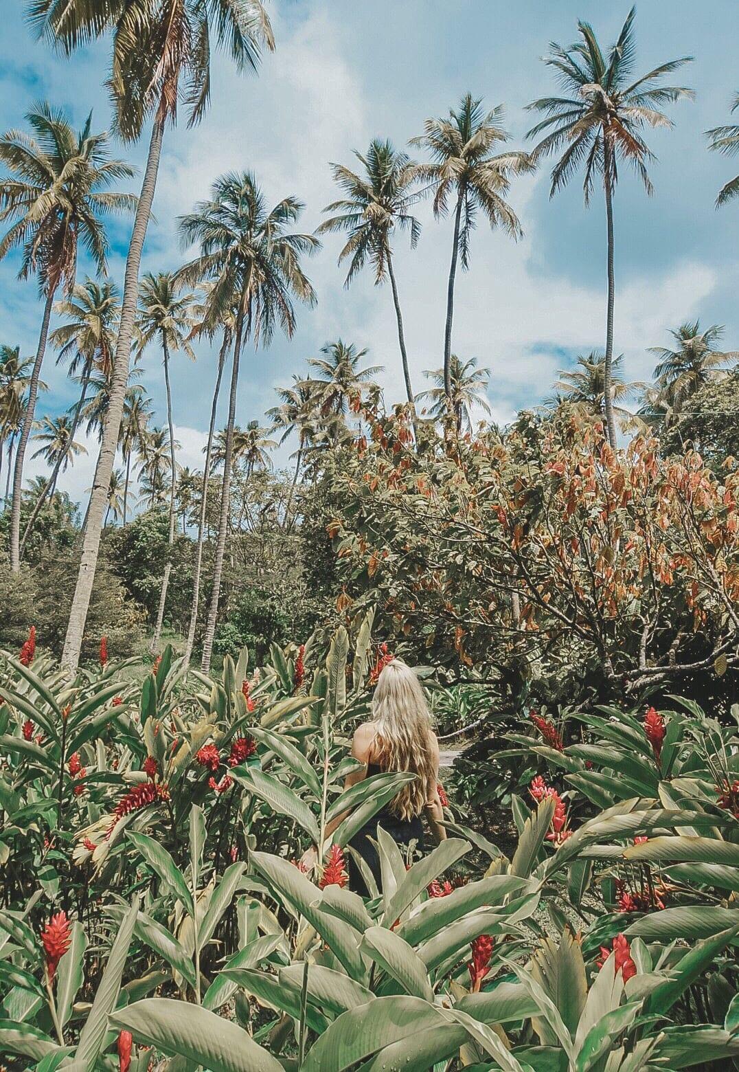 St. Lucia Tours - Cocoa Plantation